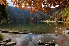 Herbststimmung am Feldsee, Schwarzwald (Stefan Giese) Tags: orange rot colors forest canon herbst natur braun landschaft schwarzwald autmn weitwinkel herbstfarben feldsee 70d tokina1116