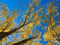 Autumn forest trees (Alejandro Hernndez Valbuena) Tags: wood november autumn trees red sun nature colors leaves weather yellow forest season landscape leaf haze woods october day colours foggy bark uphill shining godrays yellowish