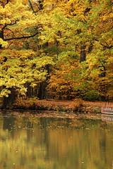 Park Leśnicki , Wrocław 24.10.2015 (szogun000) Tags: park autumn trees plants lake fall nature water canon landscape pond flora poland polska jesień wrocław lowersilesia dolnośląskie dolnyśląsk canoneos550d canonefs18135mmf3556is leśnicki parkleśnicki