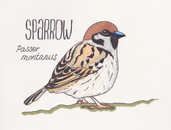 Sparrow (Kate_Lokteva) Tags: art sketch drawing sketchbook marker draw markers artworks letraset promarkers