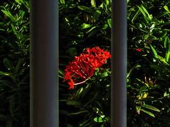 1 of Two Bars (Robert Cowlishaw-Mertonian) Tags: life light red two green nature beauty leaves bar canon outside 1 bars powershot pole shade reality inside thin thick exposed mertonian canonpowershotsx60hs robertcowlishaw sx60hs 1oftwobars