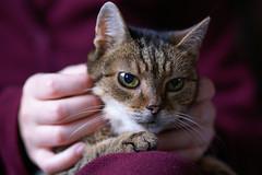 Mytzi (wietsej) Tags: cat sony zeiss a100 135 18 sonnar 13518 za wietsejongsma