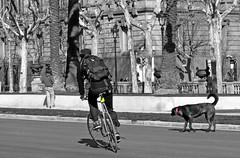 En buena compaa (marmimuralla) Tags: bcn bicicleta perro ciclista catalunya gos marmimuralla