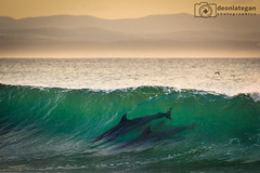dolphin family (laatideon) Tags: sea etcetc laatideon deonlategan deonlateganphotographics