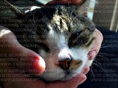 Alfio (IlGiomba) Tags: cats fusa gattini animalidacompagnia