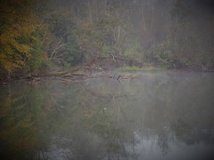 log-in (photography_isn't_terrorism) Tags: reflection water fog driftwood railroadbridge snag railroadtrestle