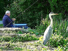 two anglers (stanama56) Tags: heron nature birds animal tiere natur vgel fischer angler reiher