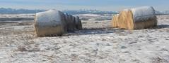 Listerine (Tracey Rennie) Tags: winter snow mountains cold sunshine rockies fresh alberta listerine haybales cochrane bracing glenbowranchprovincialpark