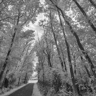 Infrared: Pumpkinvine Nature Trail, Elkhart County, Indiana
