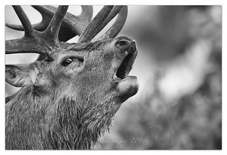 Stag...