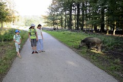 Little chat with the forest guard (S.H.-W.) Tags: vienna austria wienerwald liesing colour landscape forest wild boar childern outdoor