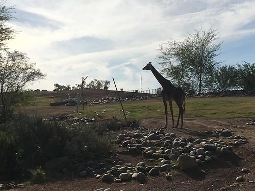 Thumbnail from Phoenix Zoo