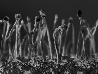The myriad tribes of the dead... | Macro Monday 2016 October 31: Spooky and Frightful