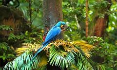 Bird on a tree (Rajavelu1) Tags: birds parrot green trees forest art aroundtheworld creative canon6d travel birdphotography streetphotography street outdoorphotography outdoor jurongbirdspark singapore simplysuperb