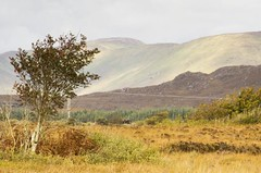 Maam cross (raghnallg (200,000+ views).) Tags: maamcross connemara shindilla landscape light mountains bogland bog west ireland
