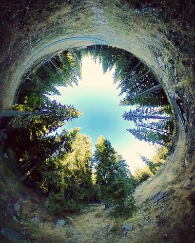 В гората I
