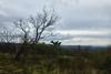 Monte San Leonardo (paolo-p) Tags: alberi trees nuvole clouds sanleonardo carso trieste