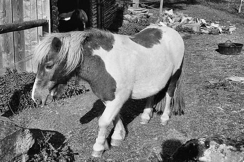 Das Leben ist kein Ponyhof ;-)