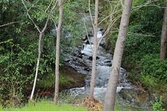 Spring Creek flowing fast Hepburn Mineral Springs Reserve_9529 (gervo1865_2 - LJ Gervasoni) Tags: hepburn springs swiss italian festa 2016 victoria australia history heritage culture celebration tradition mineral reserve