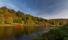 River Tay at Birnam (Birnambeekeeper) Tags: tay salmon birnam scotland autum autumn colours lightroom rivertay