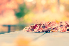 Autumn Feeling (Ernie Kwong Photography) Tags: autumnwhimsy autumn autumncolors fallcolors foliage bokeh pastel soft leaves 85mm