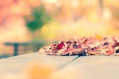 Autumn Feeling (Ernie Kwong Photography) Tags: autumnwhimsy autumn autumncolors fallcolors foliage bokeh pastel soft leaves 85mm