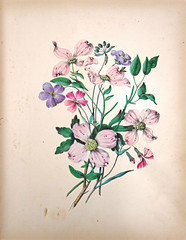 Wild Flowers folio - Wild geranium (Madison Historical Society (CT-USA)) Tags: madisonhistoricalsociety madisonhistory mhs madison connecticut ct conn connecticutscenes country usa newengland nikond600 nikon d600 bobgundersen bostonpostroad route1 allisbushnellhouse abhouse antiques old historical history museum art poetry cmbadger book document painting flower interesting image inside indoor interior picture photo scene scenes flickr clarissamungerbadger mrscmbadger clarissamunger clarissabadger botanical botanicalartist prose folio botanicalillustrator womanartist flowerpaintings graceful stylized watercolor delicacy lithographicplates illustrated illustrator sketch illustration design