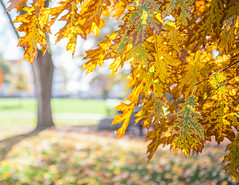 Fall Photos (university.unions) Tags: 2016 jmu rachelcrowe stockphotos tad technologyanddesign buildings campus college jamesmadison university