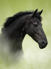 A very beautiful lady, friesian. Photographed while she was in foal. (Freddy Juhl) Tags: fineart equine texture seasons bspringmaraprmaj field animals grass horse horses majestic mane nature outdoors photography ponies pony speed strength togethernes wildhorses wildlife rstider