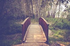 The walk bridge (michaelraleigh) Tags: f28l serene highquality reflection 2035mm canon trees bridge bitterroot unitedstates hidden infocus secluded road outdoors green canoneos5dmarkii park montana
