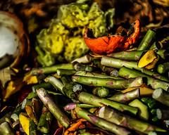 Still Life with Compost (pattyg24) Tags: autumn riveredgenaturecenter tamron18270mm wisconsin asparagus compost garbage green lettuce nature onion orange