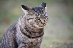 Kitty (Teruhide Tomori) Tags: animal cat japan ネコ 尾道 広島 onomichi kitty