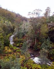 Pretty valley (LeelooDallas) Tags: australia tasmania tarraleah landscape dana iwachow fuji finepix hs20 exr water waterfall tree forest