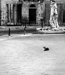 The King of the square... (prals1969) Tags: cat catalunya solsona