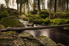 Herbst im Fichtelgebirge 07 - am weien Main (ho4587@ymail.com) Tags: herbst fichtelgebirge wald wasser main fluss licht lzb steine felsen moos grn