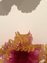 Detail of PLAnta (Duce puniceus). (musing...) Tags: pink orange mobile jewellery photostream iphone