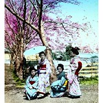 FOUR GEISHA UNDER CHERRY BLOSSOMS on a BRIGHT AND SUNNY DAY thumbnail