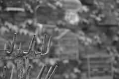 --- (CCybo) Tags: blackandwhite bw white black byn blancoynegro blanco monochrome nikon noir noiretblanc negro nb blanc monochroma negroyblanco nyb incoloro monochromie scharwz d3100 nikond3100