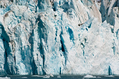 Ice wall (dragonguitar) Tags: blue sea wild usa ice nature water rock alaska rocks mare natura columbia glacier iceberg ghiaccio ghiacciaio