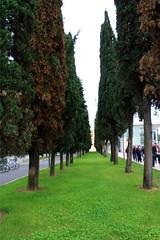 Verona IMG_2604 (nb-hjwmpa) Tags: italien italy italia verona zypressen