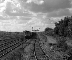 66132 at Barnetby (robmcrorie) Tags: leica white black monochrome 35mm 66 class plus signal m2 ilford fp4 semaphore dbs barnetby 66132