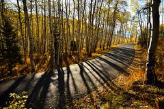 Through the Aspen Grove (JasonCameron) Tags: road morning blue autumn light shadow sky sun fall nature yellow landscape gold drive utah october loop scenic fork canyon alpine american timpanogos aspen