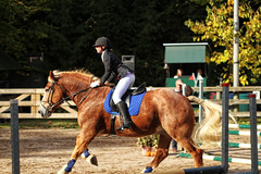 Doorn (Steenvoorde Leen - 3.4 ml views) Tags: doorn manegedentoom arreche paarden springen manege horses jumping hindernis fench 2015 halloween happyhalloween horse pferd reiten paard pferde haloween utrechtseheuvelrug cheval