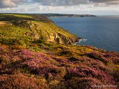 Western Cornwall (Roger B.) Tags: coast cornwall unitedkingdom heather heathland stjust gbr maritimeheath