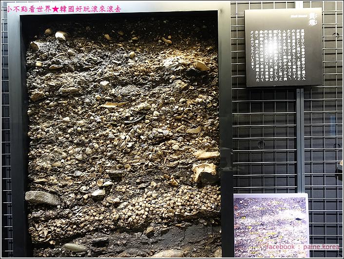 函館繩文文化博物館 (8).JPG