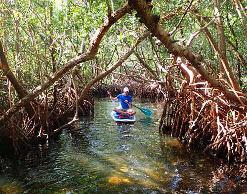 11_29_15 Private Paddle Tour Lido Key FL 05