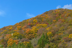 9Seya Highland (anglo10) Tags: field japan kyoto autumnleaves