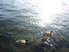 / (plattnerbauten) Tags: sun paris bird water seine architecture river duck enten plattnerbauten plattnerbautench
