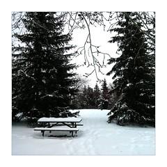 Bench (ric) Tags: snow bench edmonton fort imagemagick uploadscript imagedatanexus1296f27100 im:opts=level07508crop2448x24482500 photo:id=236874711224e43c392efojpg