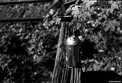 0013 (coloredsteel) Tags: leica m6 voigtlnder nokton classic 35mm f14 kodak trix 400 rodinal black white bw home developed 1100 ulm graffiti street photography colored steel coloredsteel trainspotting trainwriting
